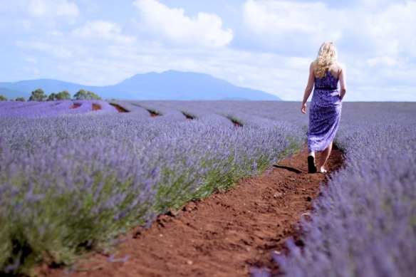 Lavender Fields Forever - 2013-04-21_202613_sense-of-place.jpg